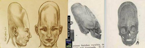 ELONGATED PARACAS SKULL + DRAWING 02