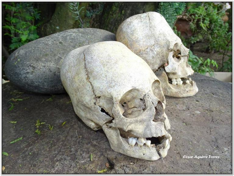ELONGATED SKULL-ECUADOR-2