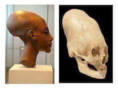 ELONGATED SKULL-ECUADOR-EGYPTIAN