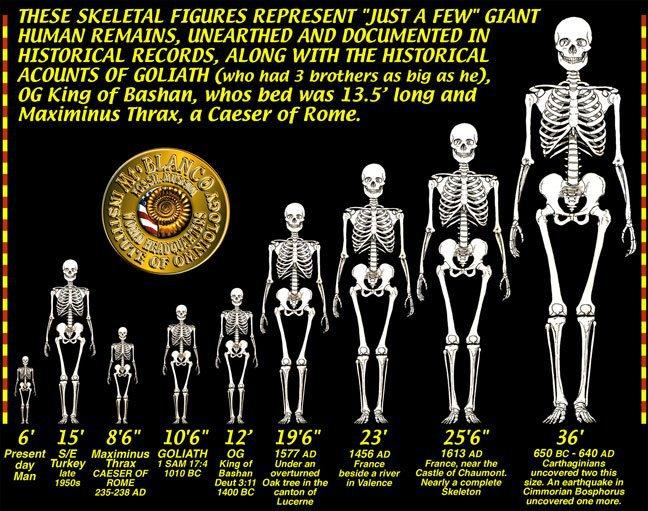 Giants human remains found scale